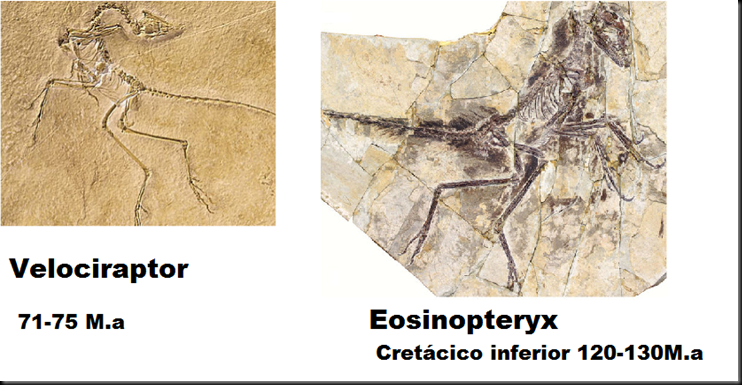 El eosinopteryx, el nuevo fraude de dino-ave en la teoría de la evolución Image_thumb41