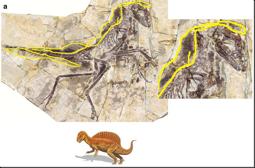 El eosinopteryx, el nuevo fraude de dino-ave en la teoría de la evolución Image_thumb42