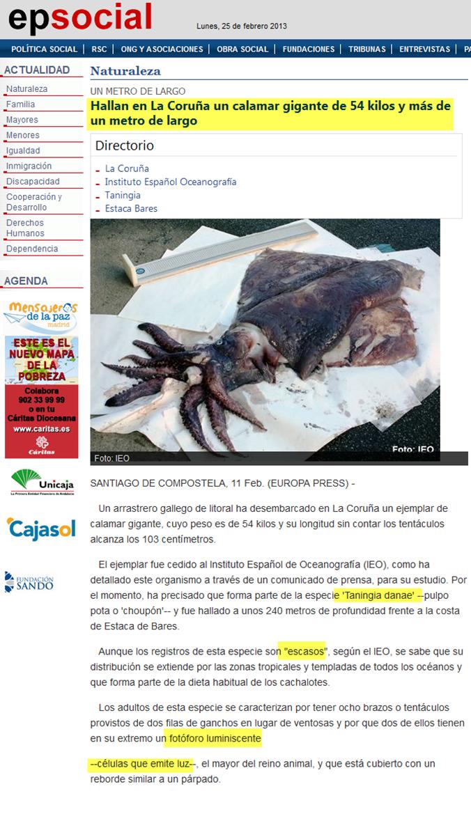 Hallan en La Coruña un calamar gigante con células luminiscentes Image_thumb22